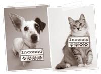 adoption chien adoption chat et adoption tous animaux de compagnie avec seconde chance. Black Bedroom Furniture Sets. Home Design Ideas