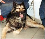 Max adopté au refuge de Cournonterral dans l'Hérault