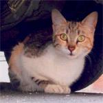 Comité Rennais pour l'Animal en Danger