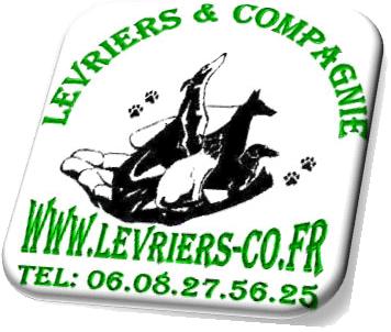 Lévriers & Compagnie