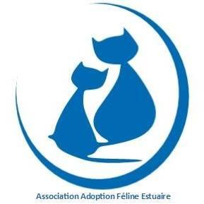 Adoption Féline