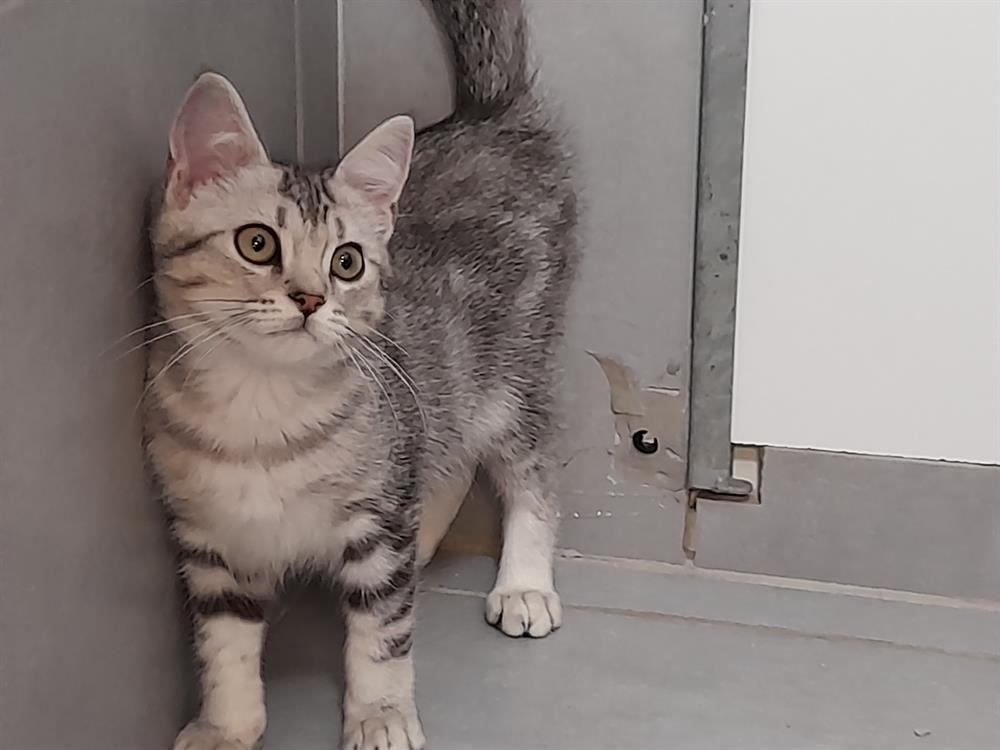 WILFRID en cours d 'adoption