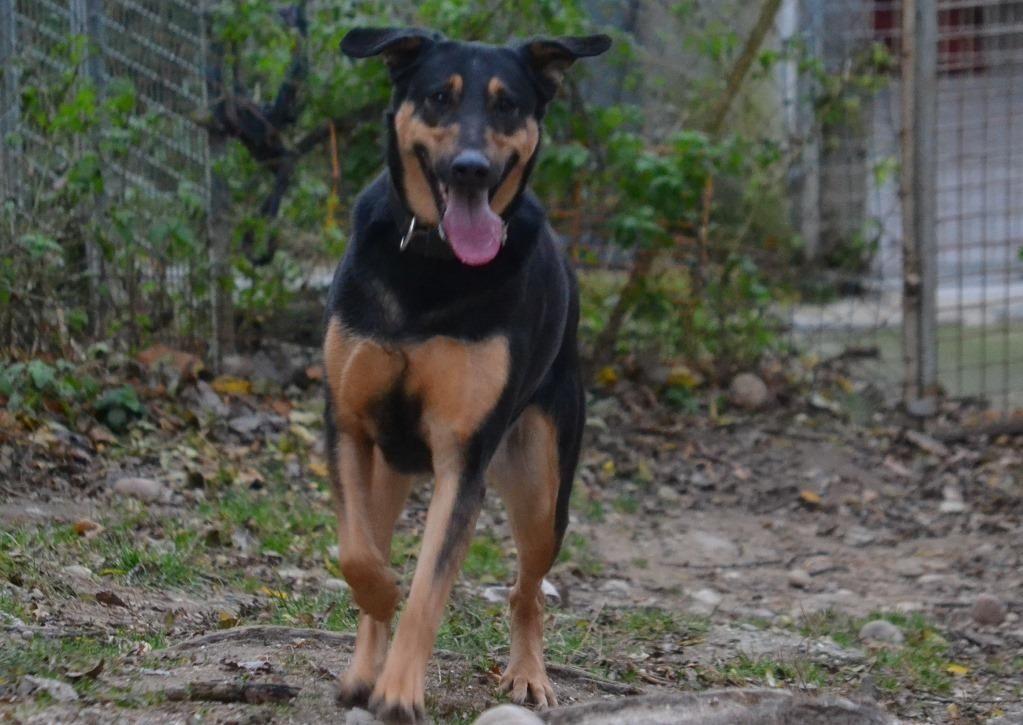 Adoption de Kaya: Grand chien race indéfinie, région Rhône