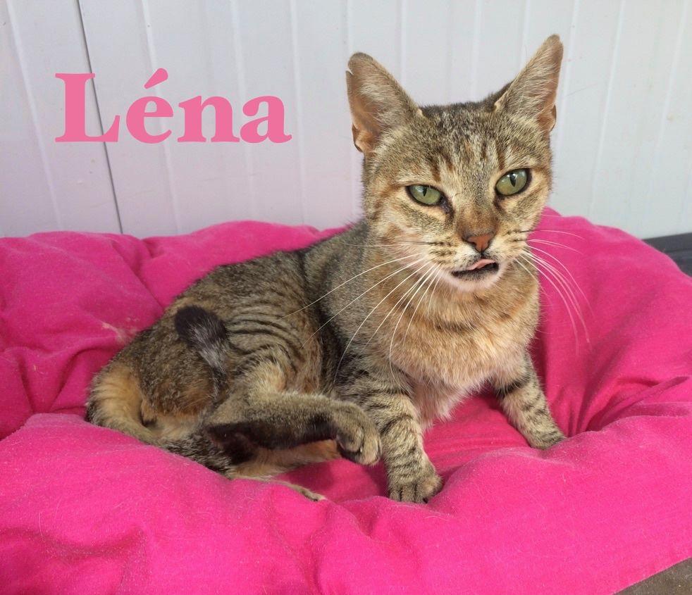 Adoption de lena moyen chat europ en r gion midi pyr n es for Adaptation chat nouvelle maison
