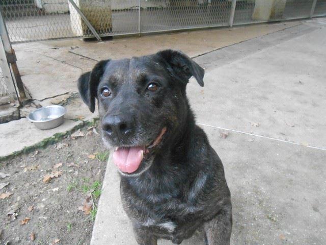 adoption chien, adoption chat et adoption tous animaux de compagnie