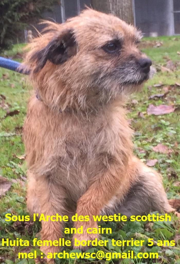 Adoption De Huita Petit Chien Border Terrier Region Lorraine
