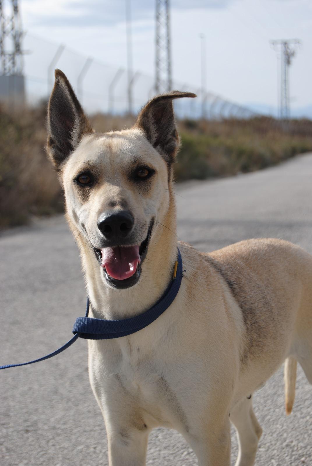 Adoption de Dana: Grand chien chien croisé grande race
