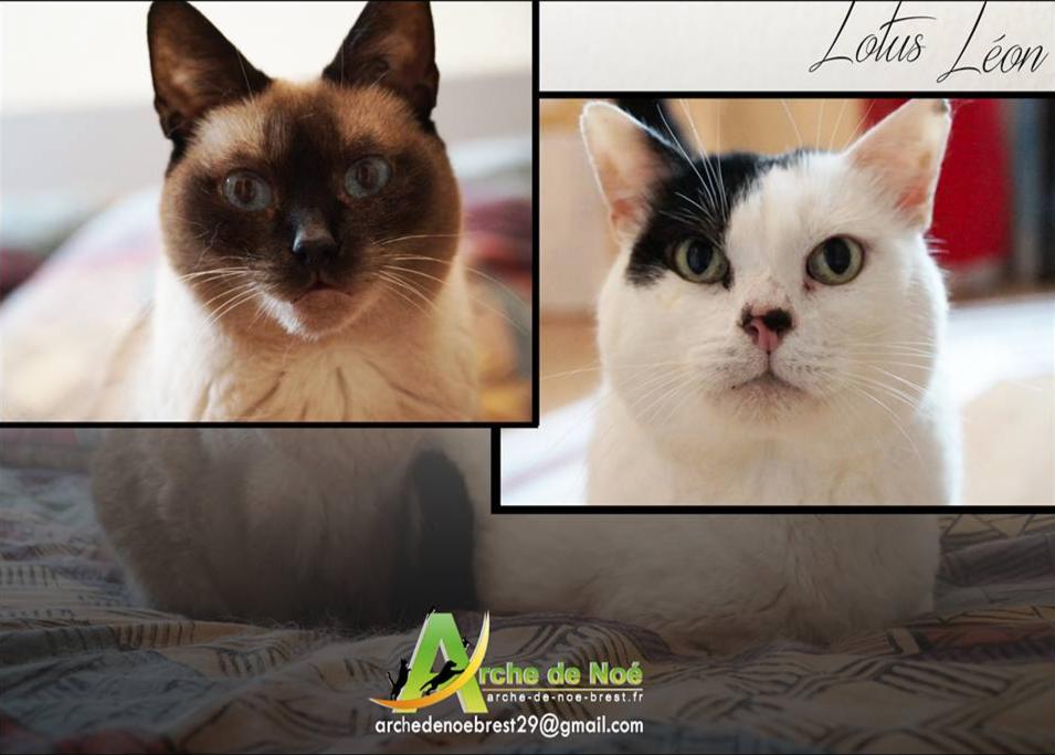 Lotus et Léon (inséparables)