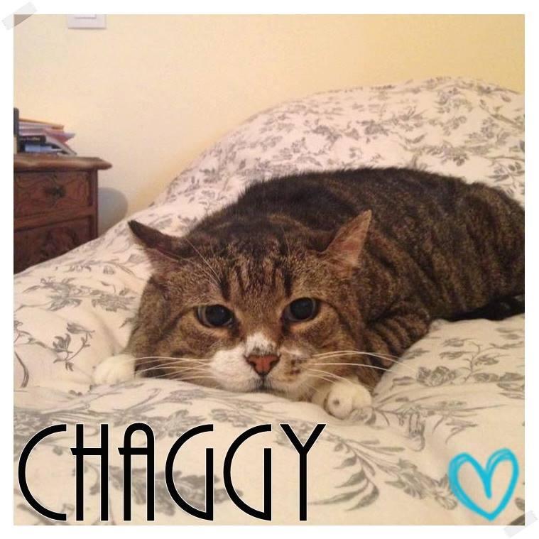 CHAGGY