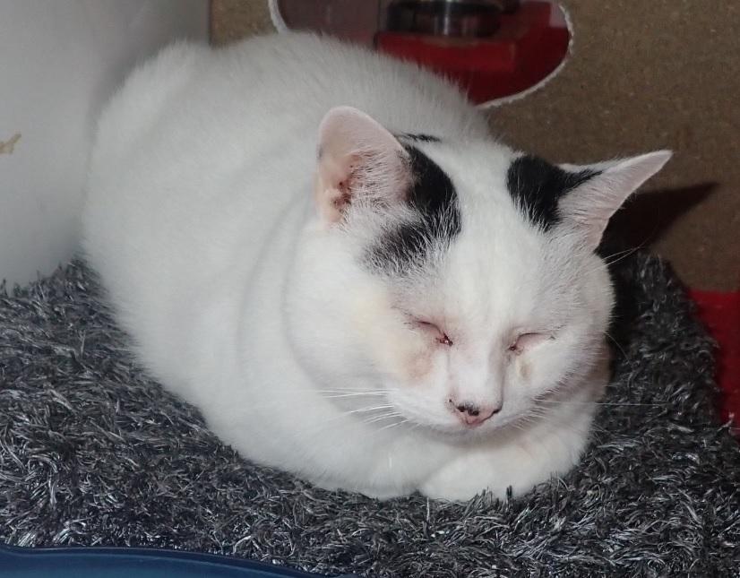 Loukoum, chat battu, non soigné, négligé, abandonné