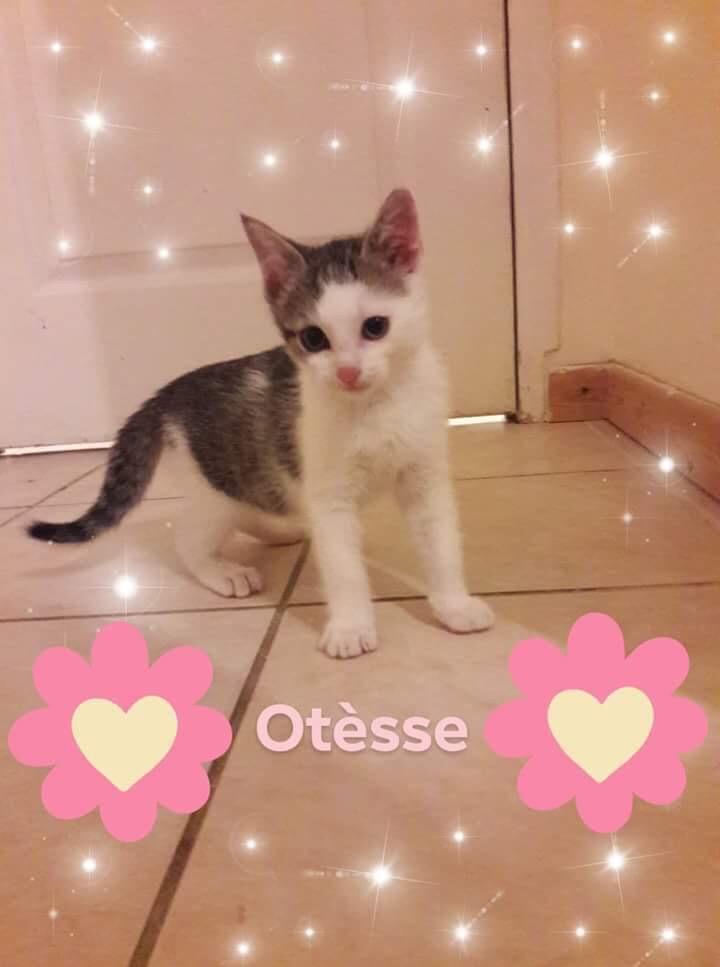 Otèsse