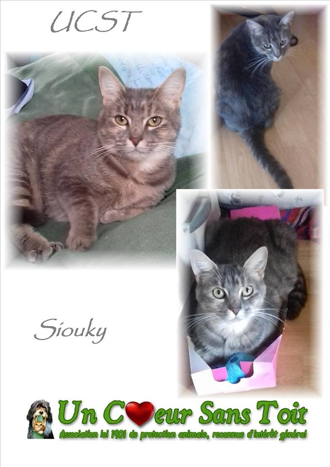 Siouky