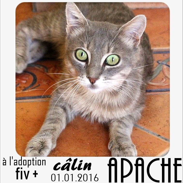 Apache à parrainer