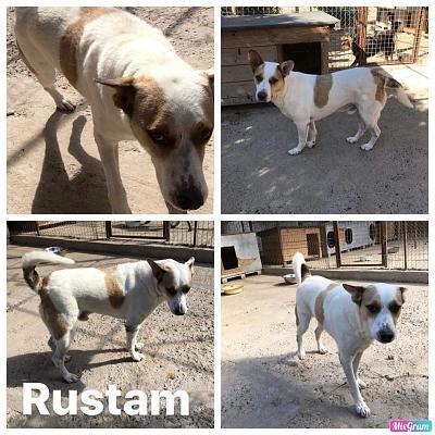 RUSTAM -  8 ans (6 ans de refuge)   Asso Datcha (Moldavie) 5bffc48180b41230194499