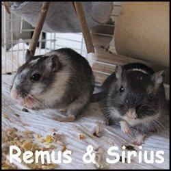 Remus et Sirius