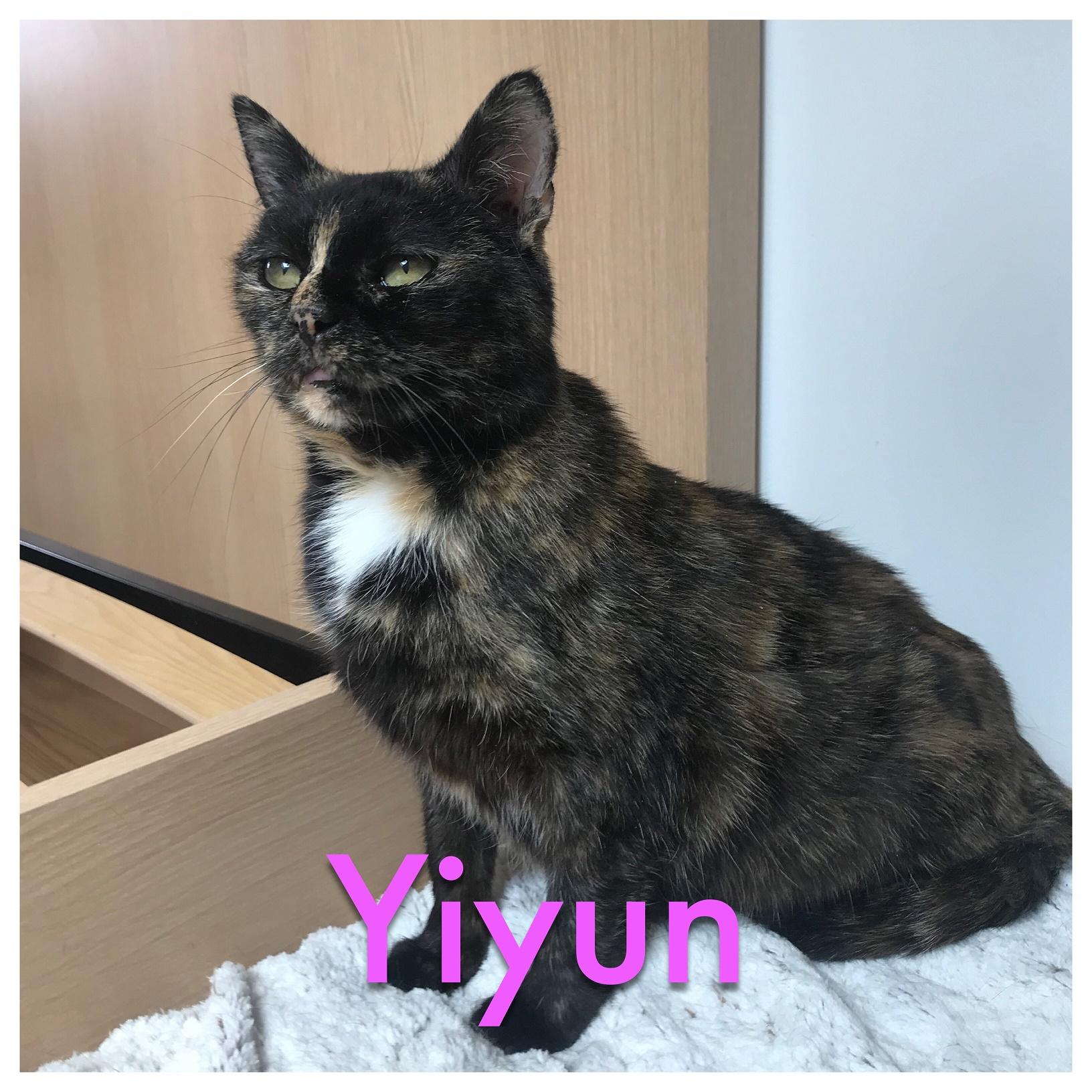 Yiyun
