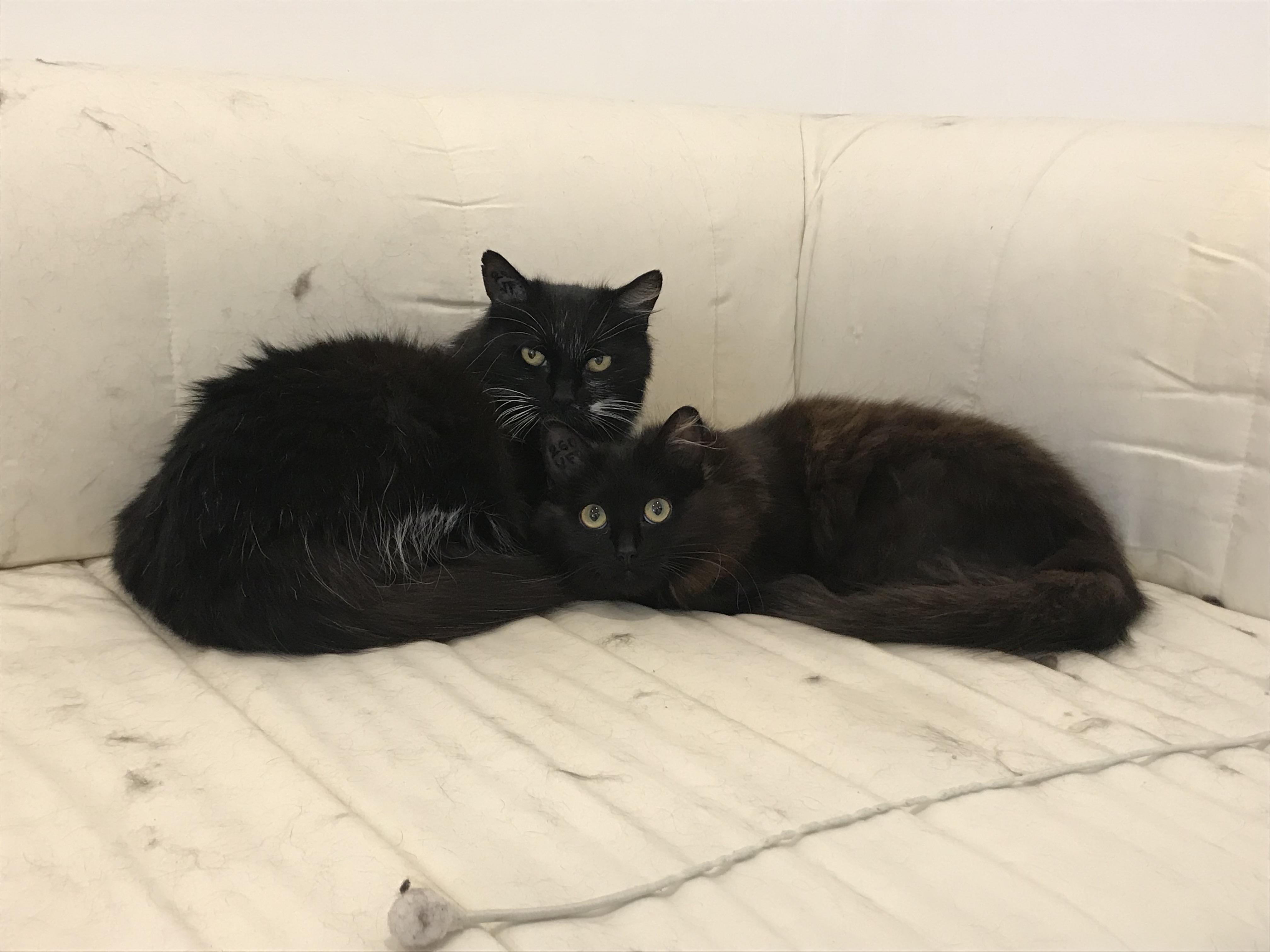 Nami et Leilani