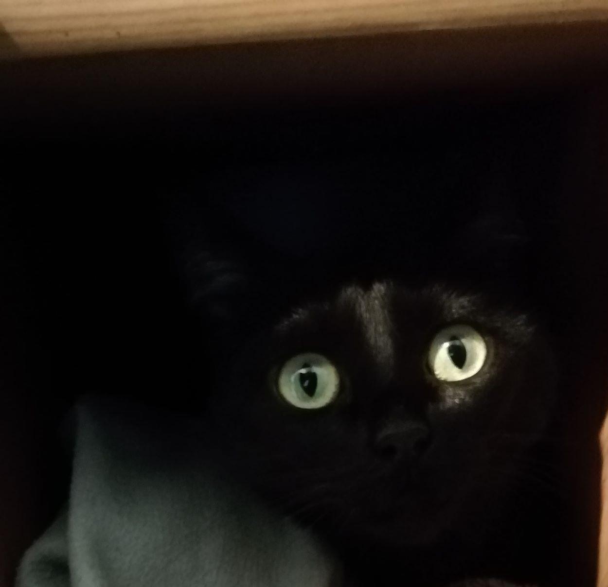 très sombre chatte pics