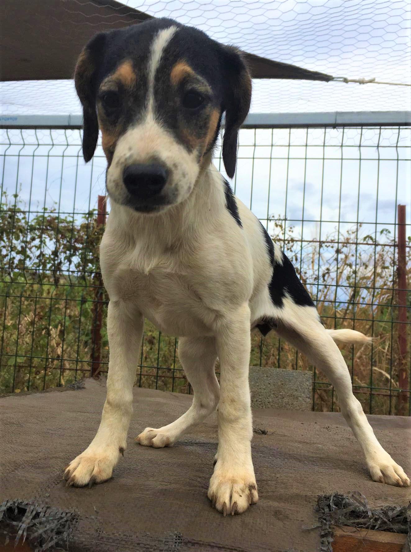 Adoption De Naya Petit Chien Fox Terrier Region Aquitaine
