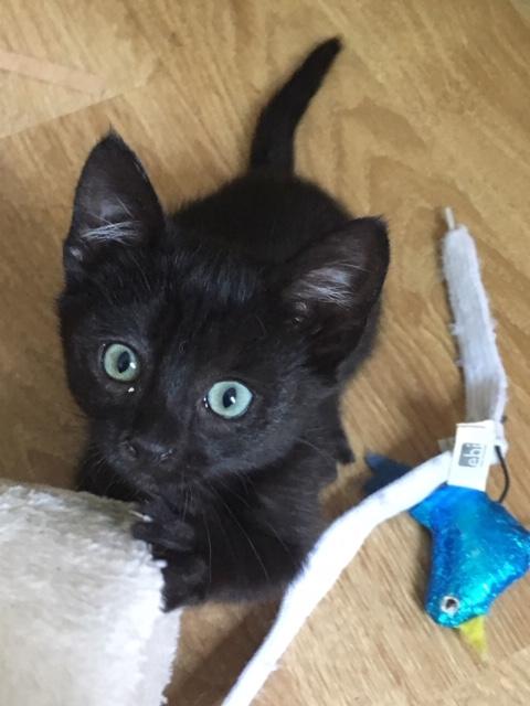 Poppy-cat