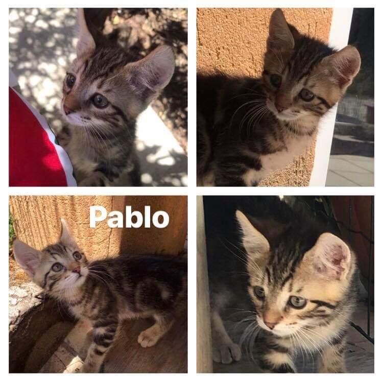 Pablo et Ploum