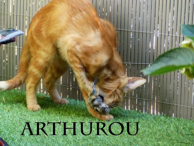 ARTHUROU chasse les souris