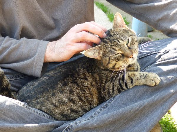 VINIUS chat à genoux