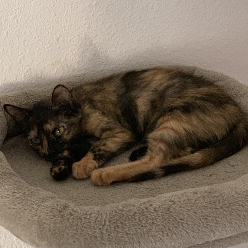 Pétunia, chaton 3 mois