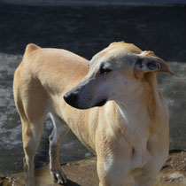 LUBIA (adoptable France et pays limitrophes)