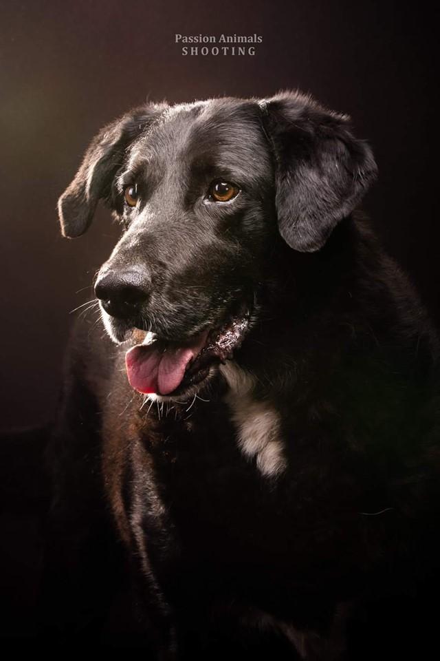 EOSs - x labrador noir 13 ans  (11 ans de refuge)  - Refuge SAM à Flassans sur Issole (83) 5da07fad57090773741552