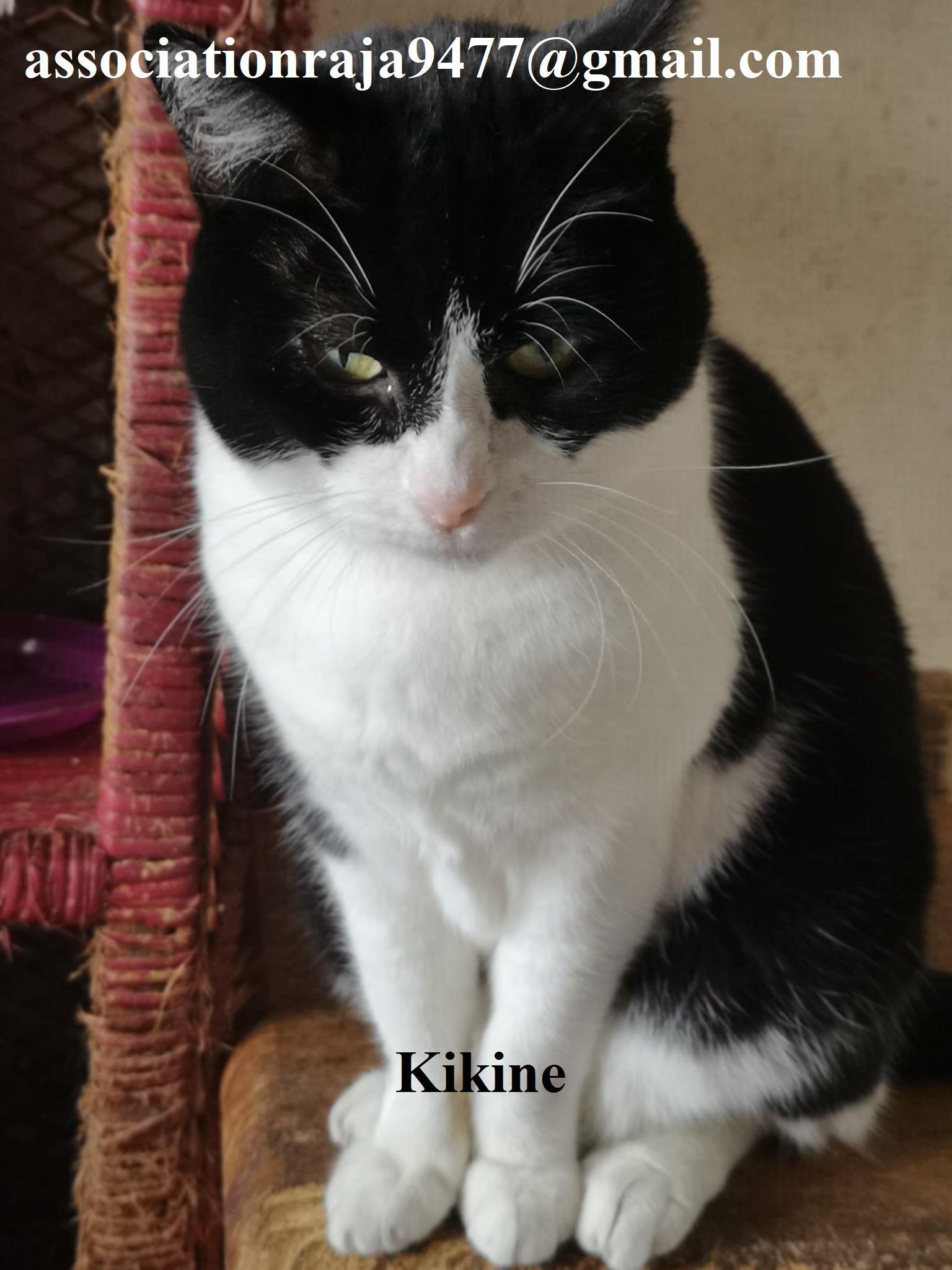 Kikine