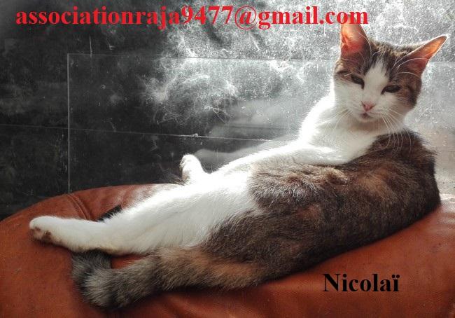 Nicolaï