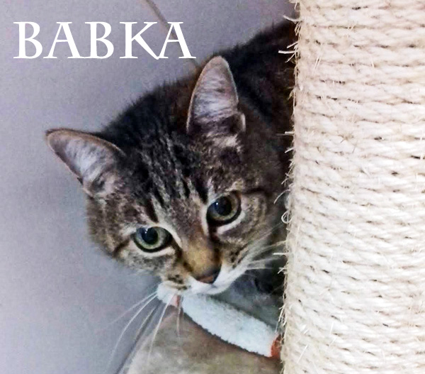Un panier retraite pour BABKA 14 ans, adorable
