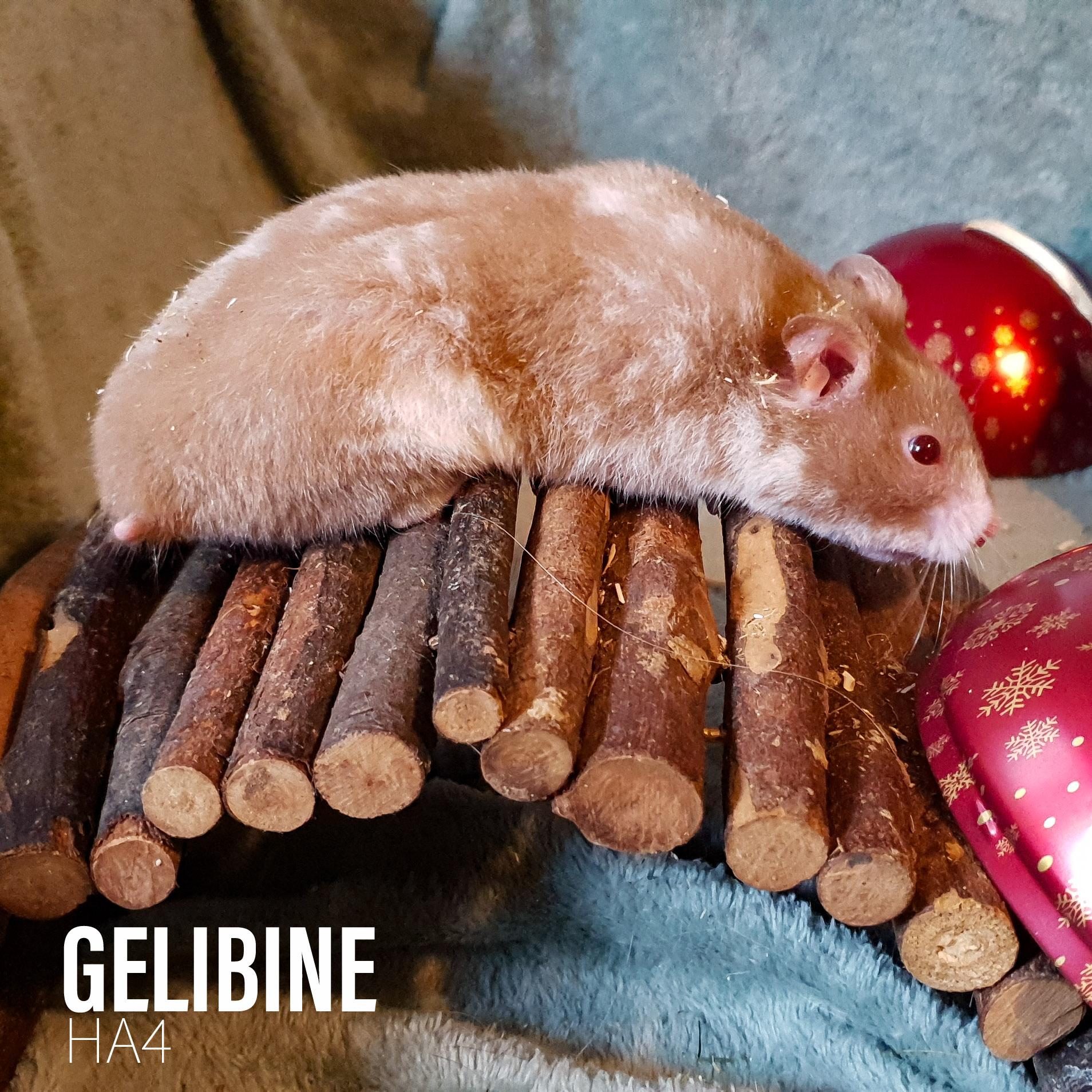 Gelibine
