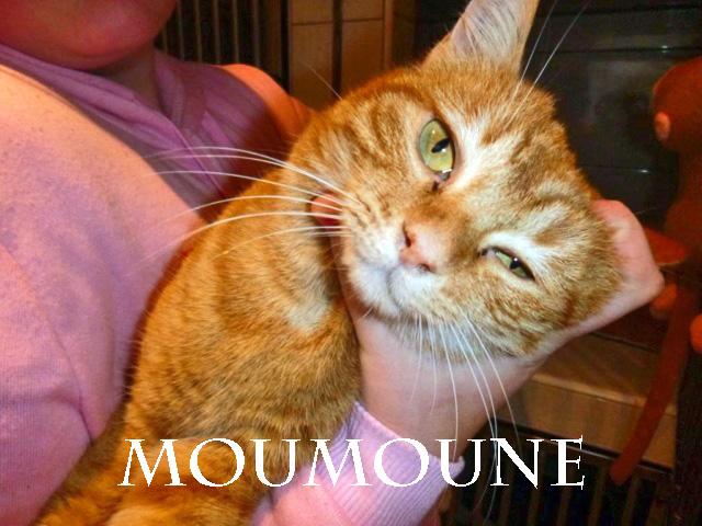 MOUMOUNE chat à bras