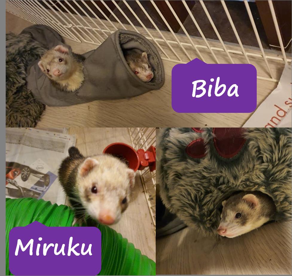 Biba et Miruku