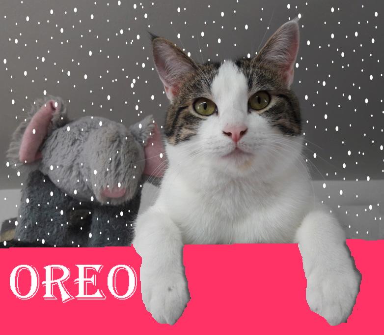 (SOS) OREO gentil malicieux