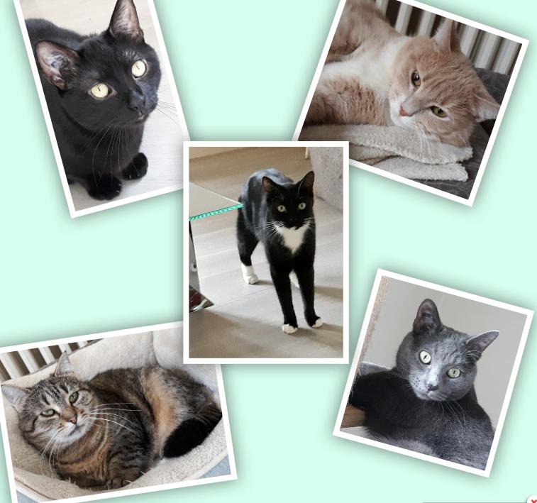 5 adorables jeunes chats mâle et femelles