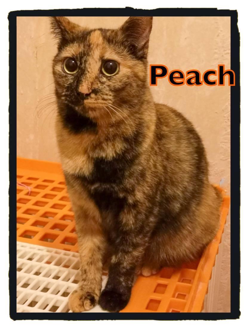 Peach - Adoptée