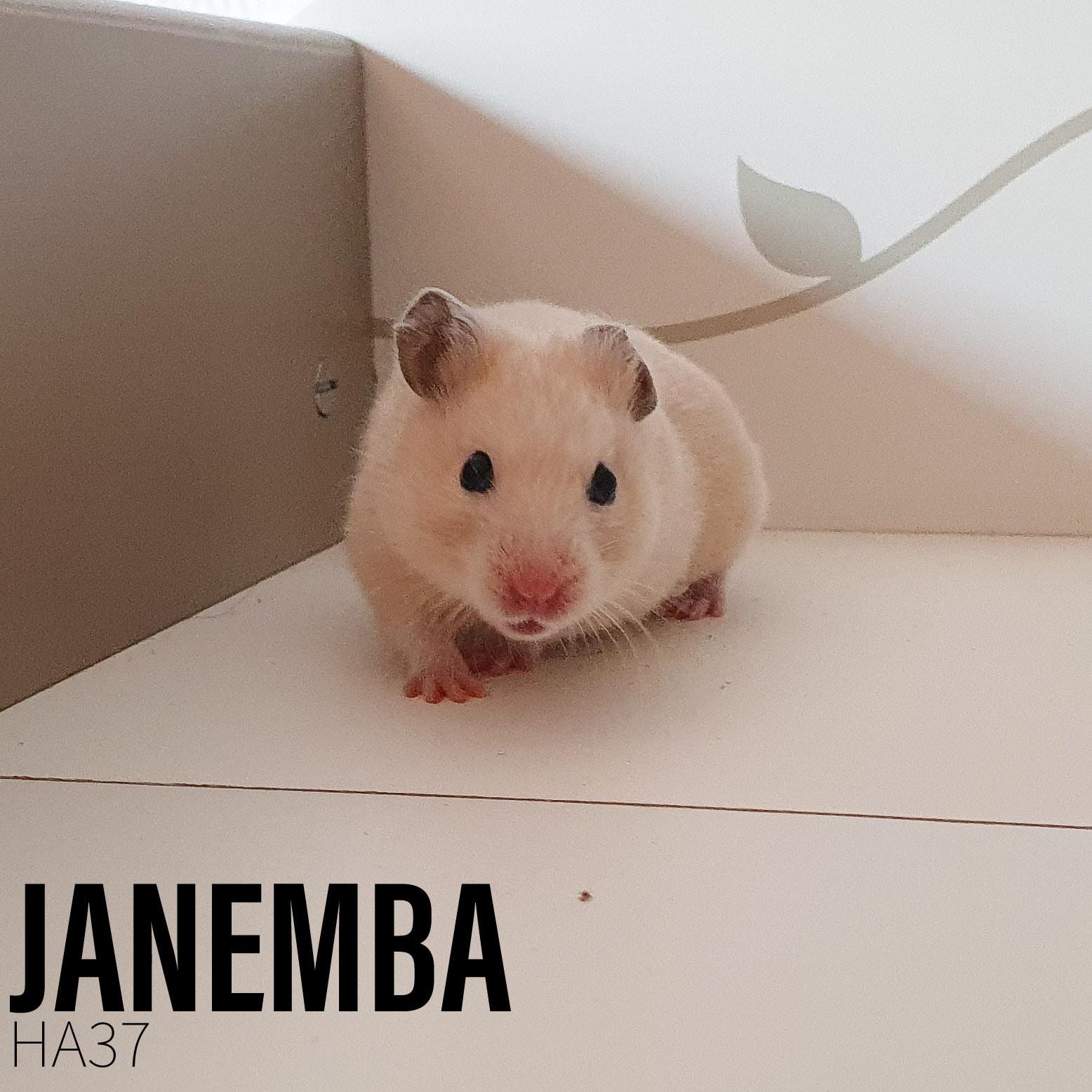 Janemba