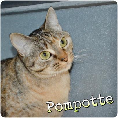 Pompotte