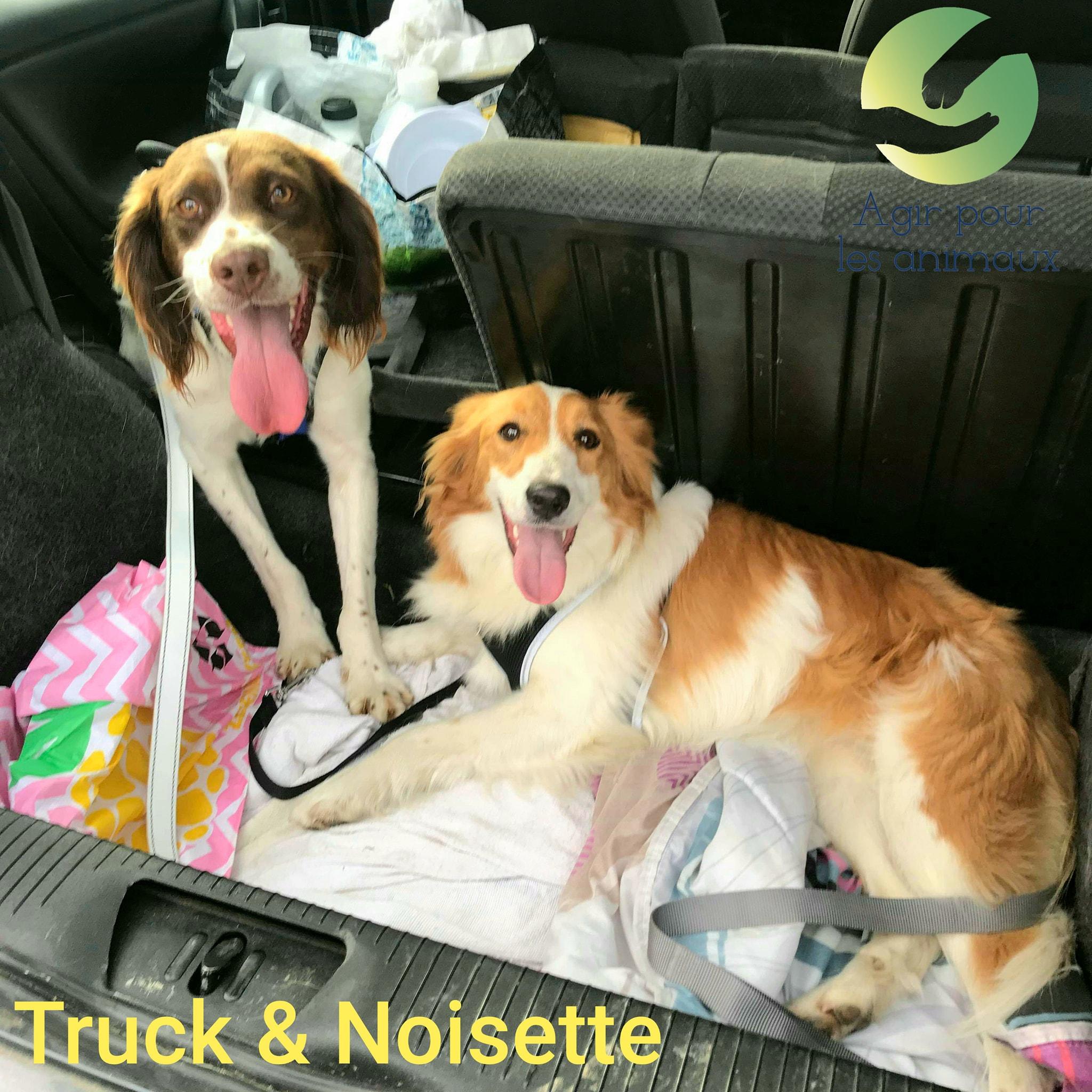 TRUCK et NOISETTE