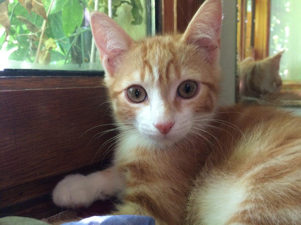 Minidou, chaton 4 mois