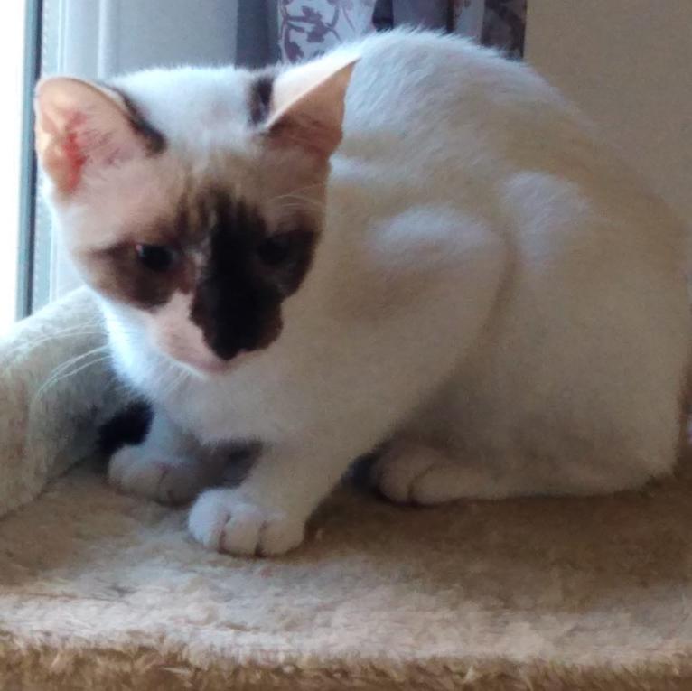 Cats'eyes, chaton 4 mois et demi