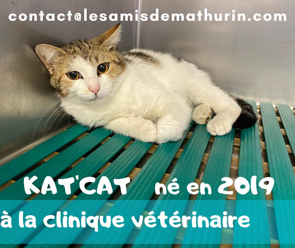 """KAT""""CAT"""