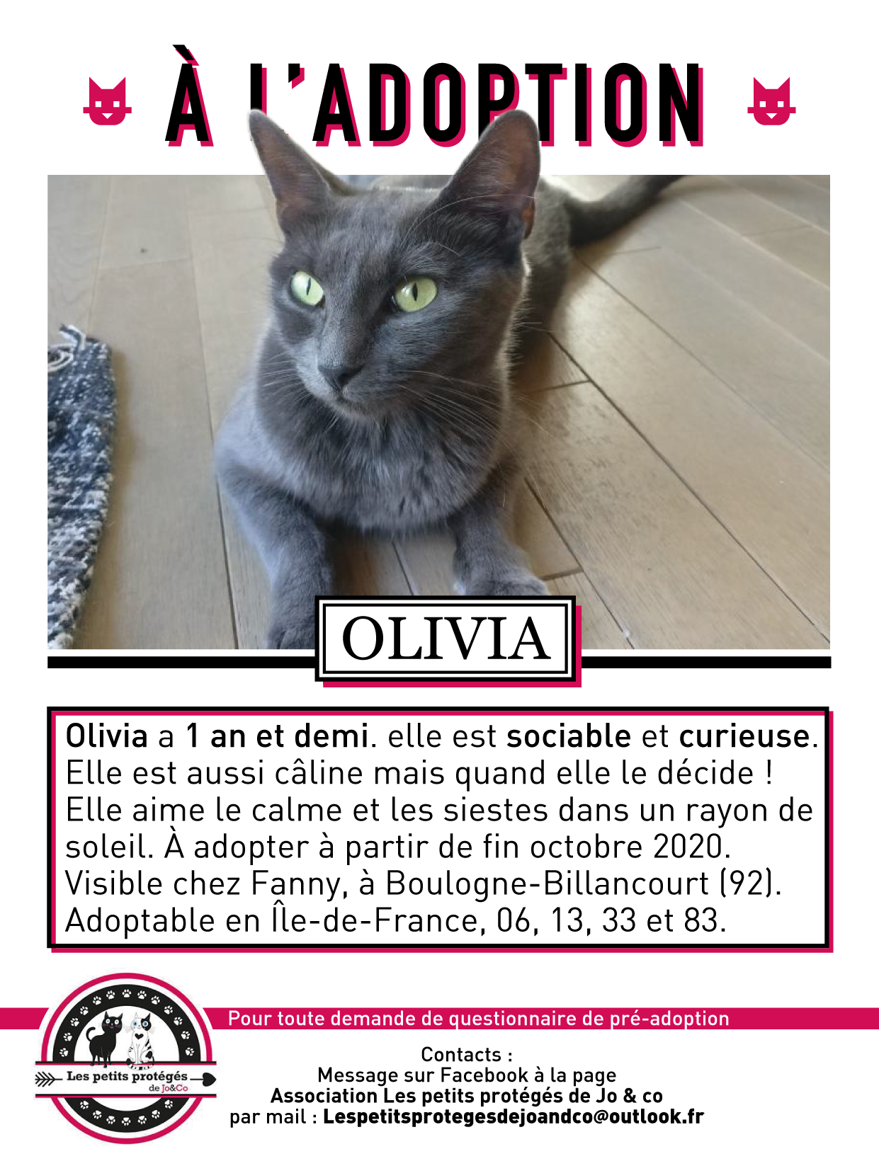 Adoption De Olivia Moyen Chat Europeen Region Ile De France