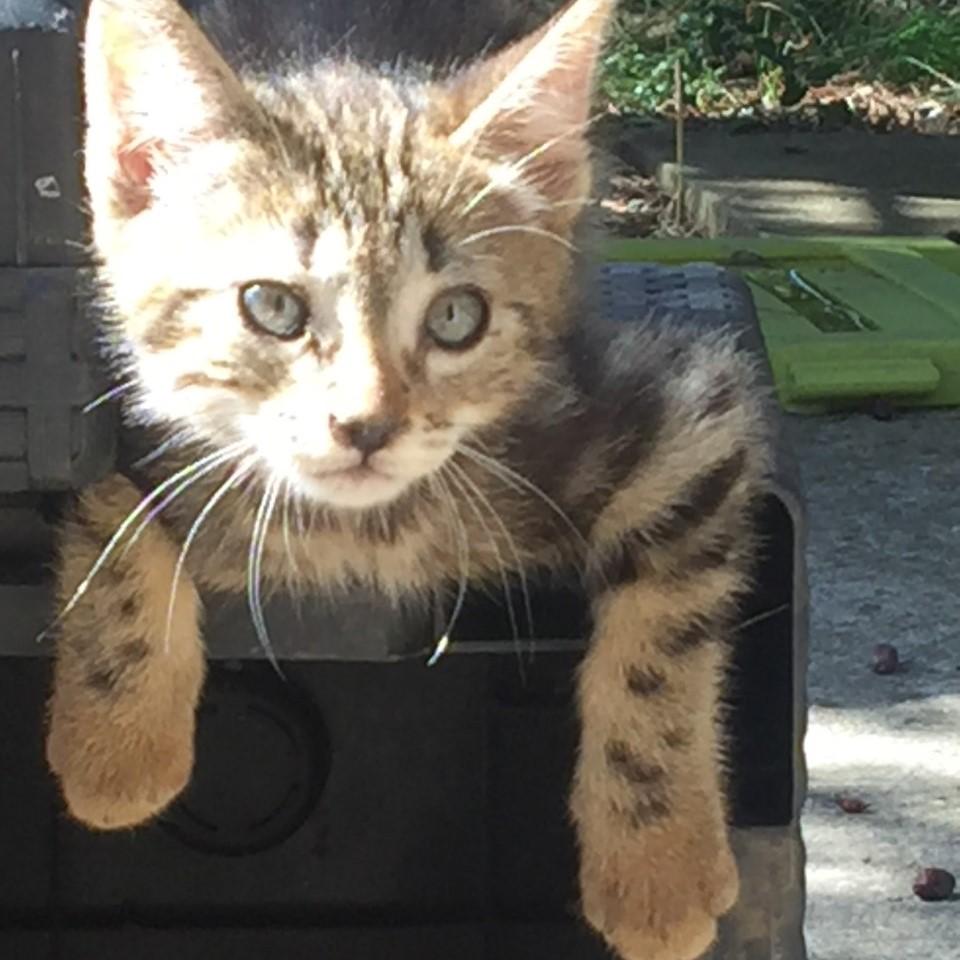 Nigel, chaton 2 mois