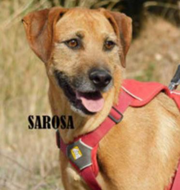 Saroa (adoptable France et pays limitrophes)