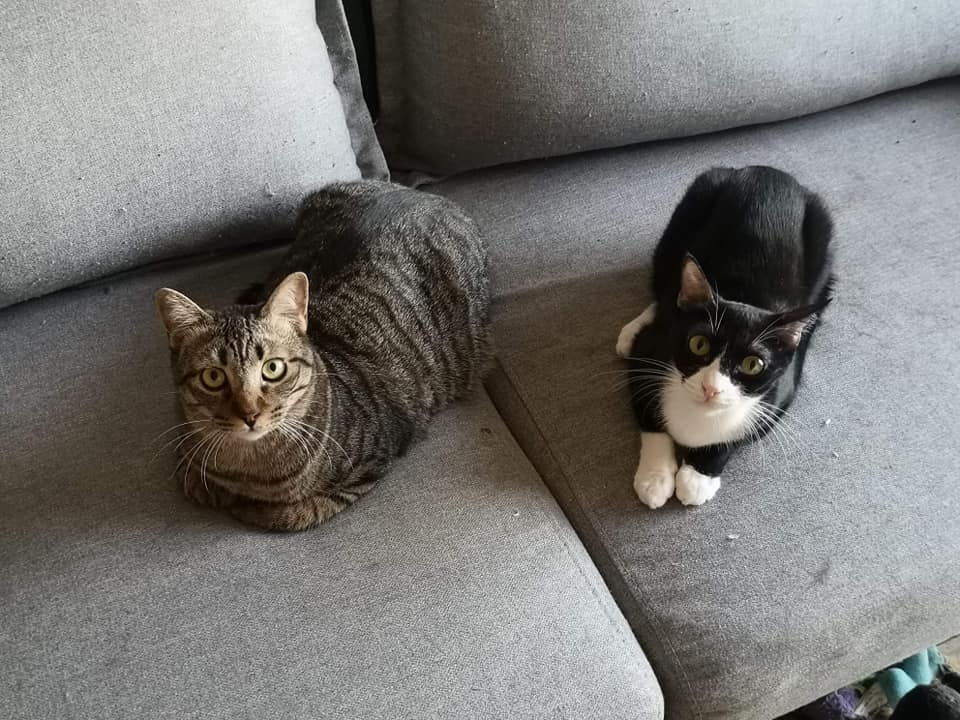 Patch & May (double adoption)