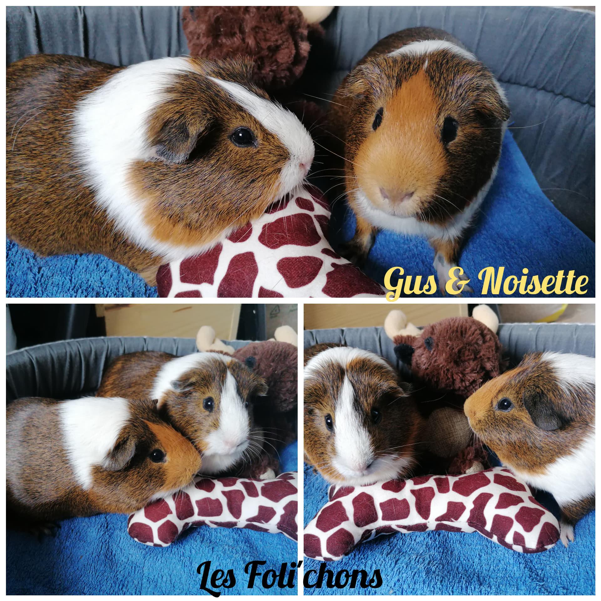 Gus & Noisette